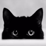 云养猫软件安卓版