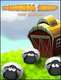 狂奔的小羊:小小世界